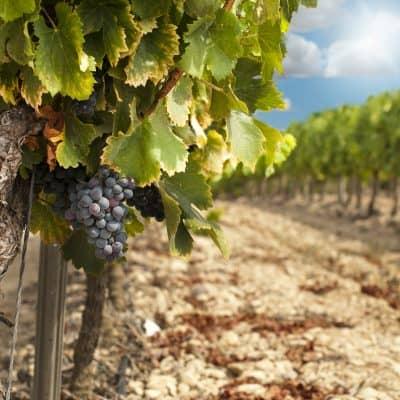 Andalucian Wine Ronda