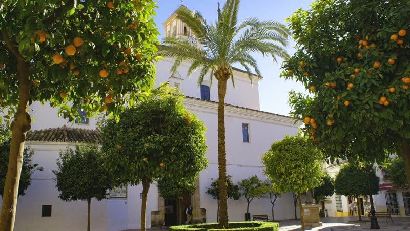 palm & orange trees in marbella