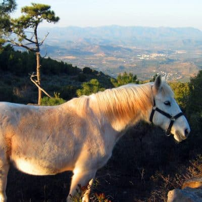 white horse in spanish mountains