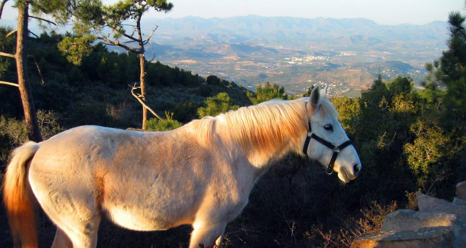Horse riding in Andalucia